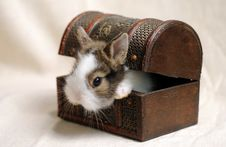 Free Little Rabbit Stock Photos - 9328523