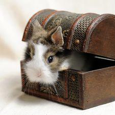 Free Little Rabbit Royalty Free Stock Photos - 9328578