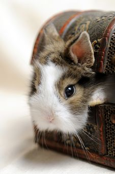 Free Little Rabbit Stock Images - 9328594