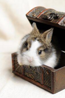 Free Little Rabbit Stock Photos - 9328623