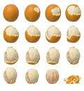 Free Oranges Stock Image - 9333951
