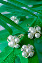 Free Pearl Ornaments Royalty Free Stock Images - 9336459