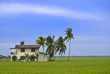 Free Isolated Paddy Field House Stock Photos - 9330523