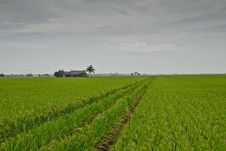 Asia Paddy Field Series 4 Royalty Free Stock Images