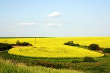 Free Wheat Field Stock Image - 9331691