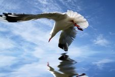 Free Flight Of Reflection Stock Image - 9334331