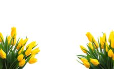 Free Yellow Tulips Stock Images - 9334764