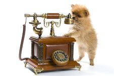 Free Puppy Of A Spitz-dog With Phone Stock Photo - 9335530