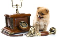 Free Puppy Of A Spitz-dog With Phone Royalty Free Stock Photos - 9335538