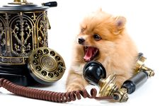 Free Puppy Of A Spitz-dog With Phone Royalty Free Stock Images - 9335549