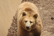 Free Bear Royalty Free Stock Photos - 9336078