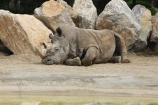 Free Rhino Stock Photography - 9336202