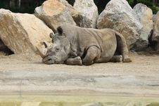 Free Rhino Stock Photos - 9336213