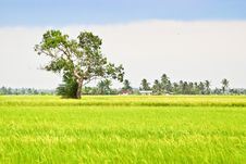 Free Asia Paddy Field Series 5 Stock Photo - 9338270