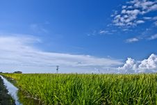 Free Asia Paddy Field Series 7 Royalty Free Stock Photography - 9338397
