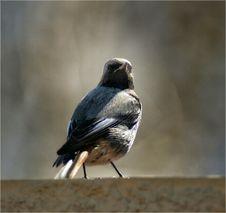 Free Little Bird Stock Photography - 93368622