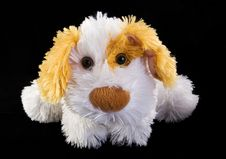 Free Teddy Dog Royalty Free Stock Image - 9341326
