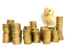 Free Chicken Among Coins Stock Image - 9341331