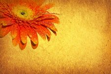 Free Gerbera Stock Photography - 9341502
