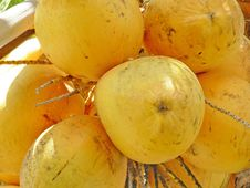 Free Coconuts Close Up Stock Photos - 9343423