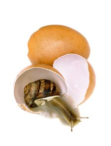 Free Egg And A Snail Stock Image - 9343861