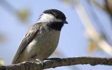 Free Little Bird Alone Stock Photos - 9343913