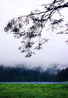 Free Yulong Snow Mountain-Spruceplain Royalty Free Stock Photo - 9344545