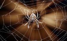 Free Spider On Cobweb Royalty Free Stock Photos - 9345948