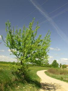 Growing Tree At The Countryside Road Royalty Free Stock Photography