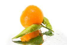 Fresh Mandarin Royalty Free Stock Photography