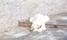 Free Polar Bear Lying Stock Images - 9347044