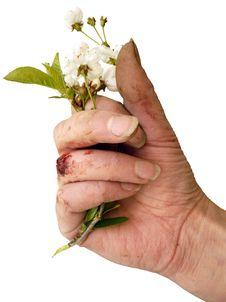 Bloody Gardening Stock Image