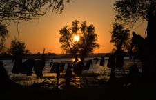 Sunset On Danube Delta Royalty Free Stock Photo