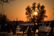 Warm Sunset On Danube Delta Stock Image
