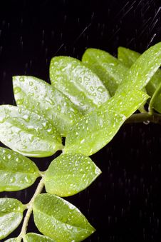 Free Water Drops On  Plant Leaf Stock Photo - 9347830