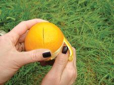 Free Orange Fruit And Grass Stock Photo - 9348760
