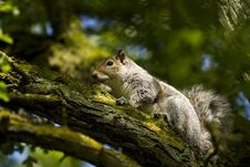 Free Squirrel Surrounded By Very Green Tree Stock Photography - 9348802