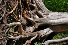 Free Displaced Dead Tree Stock Photos - 9349963