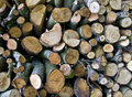 Free The Wood Pile Stock Image - 9356681