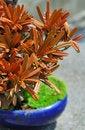 Free Plant Royalty Free Stock Photos - 9358168