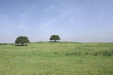 Free Field Landscape With Two Trees Stock Photo - 9350240
