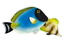 Free Coral Fishes Royalty Free Stock Images - 9350599