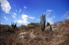 Free Cactus Stock Photography - 9352922