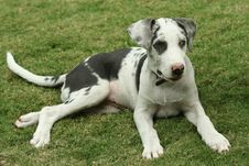 Free Puppy Sitting On Grass Stock Image - 9353291