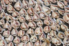 Free Dried Salted Fish Series 1 Stock Photography - 9354922