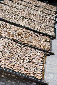 Free Dried Salted Fish Series 1 Stock Photography - 9354992