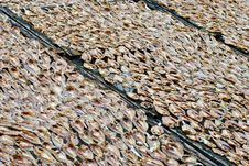 Free Dried Salted Fish Series 1 Stock Photography - 9355282