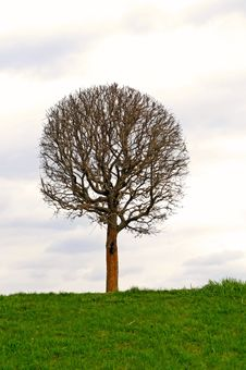 Free The Bare Tree Royalty Free Stock Photography - 9355307