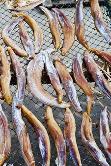 Free Dried Salted Fish Series 3 Royalty Free Stock Photos - 9355328