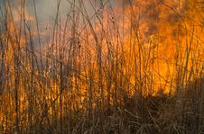 Flame Of Brushfire 16 Stock Photography